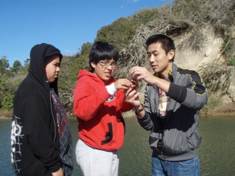 Observing specimens near the coast