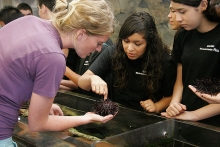 docent shows sea urchin at touch tanks