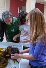Kids and parents looking at sea urchins